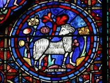 Chartres vitrail